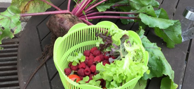 fresh, vegetables, raspberries, beetroot, garden, produce, France | See more at www.diywoman.net