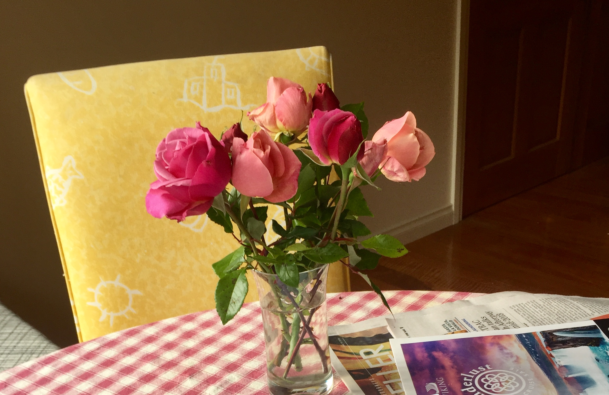 Pink late bloomer roses on a red and white checked tablecloth in front of a yellow chair