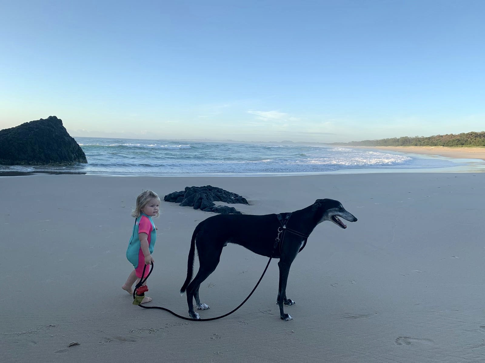 Small child standing behind a greyhound on a beach